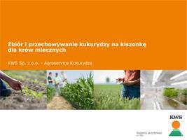 Produkcja kukurydzy kiszonkowej